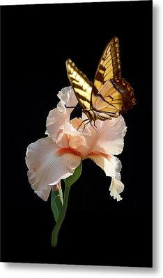Peachy Tasty Sip Metal Print by J Cheyenne Howell