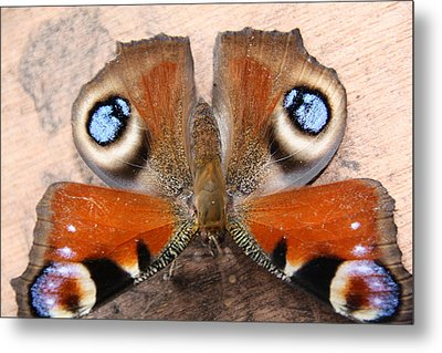 Peacock Butterfly Metal Print by Liz Bills