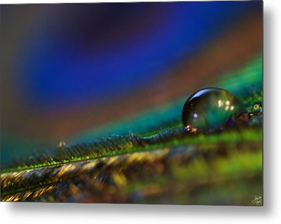 Peacock Drop Metal Print by Lisa Knechtel