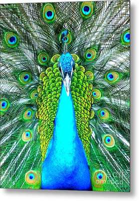 Peacock Face On Metal Print by Heidi Manly