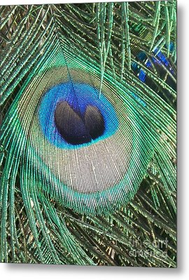 Peacock Feather Metal Print by Eric  Schiabor