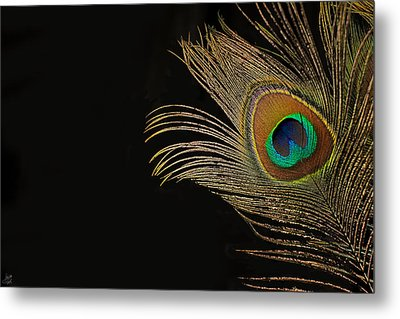 Metal Print featuring the photograph Peacock Feather Still Life by Lisa Knechtel