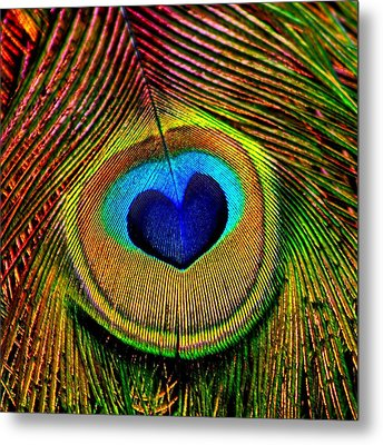 Peacock Feathers Eye Of Love Metal Print