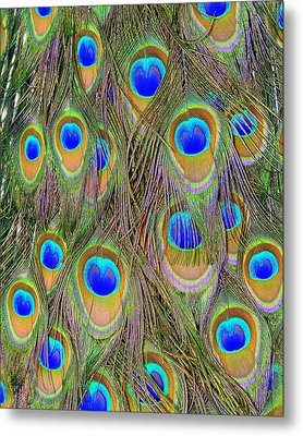 Peacock Feathers Metal Print by Ramona Johnston