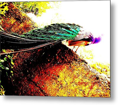 Metal Print featuring the photograph Peacock Tail by Vanessa Palomino