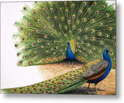 Peacocks Metal Print by RB Davis