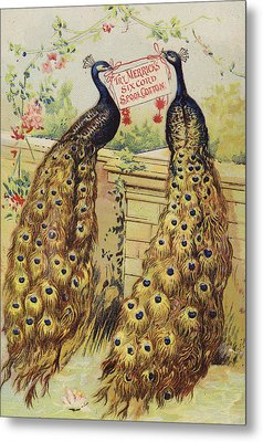 Peacocks Sitting On Wall Metal Print by American School