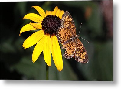 Pearl Crescent Butterfly Metal Print
