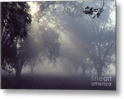 Pecan Grove On A May Morning Metal Print by Debbie Bailey