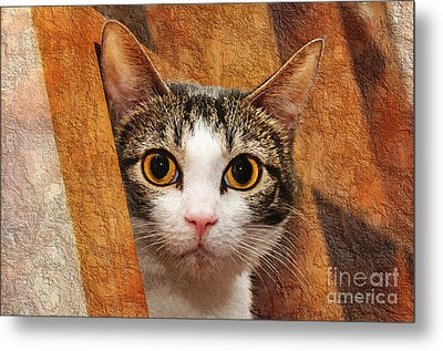 Peek A Boo I See You Metal Print by Andee Design