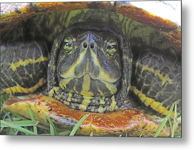 Metal Print featuring the photograph Peek A Boo by Judith Morris