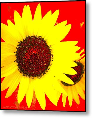 Metal Print featuring the photograph Peek A Boo by Kathy Barney