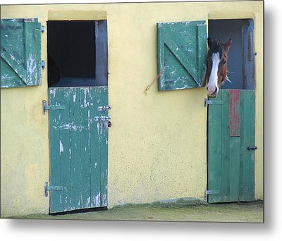 Peekaboo Metal Print by Suzanne Oesterling