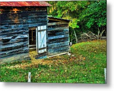 Metal Print featuring the photograph Peeking Calves by Kenny Francis