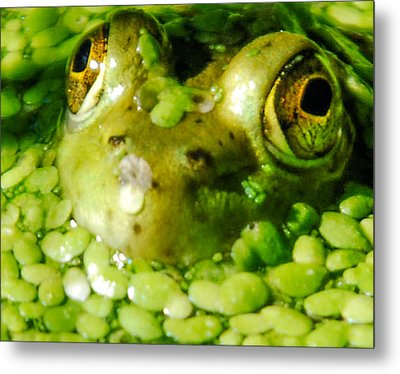 Peeping Through The Algae  Metal Print by Optical Playground By MP Ray