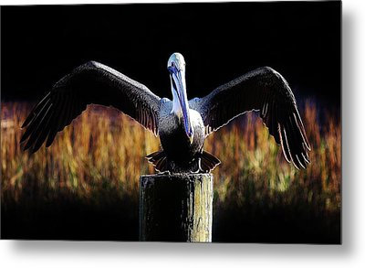Pelican All Aglow Metal Print by Paulette Thomas