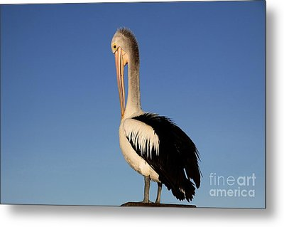 Pelican Alone Metal Print