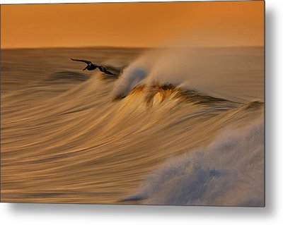 Metal Print featuring the photograph Pelican And Wave  Mg_6950 by David Orias