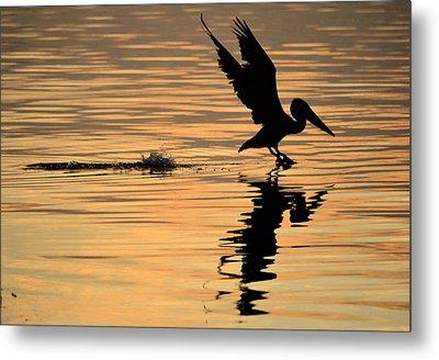 Pelican At Sunrise Metal Print by Leticia Latocki