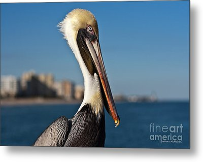 Metal Print featuring the photograph Pelican by Barbara McMahon