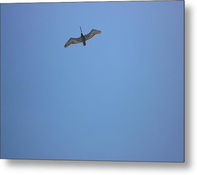 Metal Print featuring the photograph Pelican by Bill Woodstock