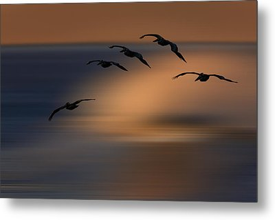 Metal Print featuring the photograph Pelican Blur  73a2324 by David Orias