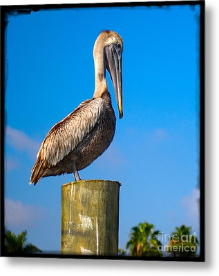 Metal Print featuring the photograph Pelican by Carsten Reisinger