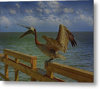 Pelican Eating Metal Print by J Riley Johnson