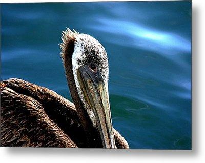 Pelican Eyes Metal Print