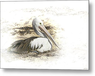 Metal Print featuring the photograph Pelican by Holly Kempe