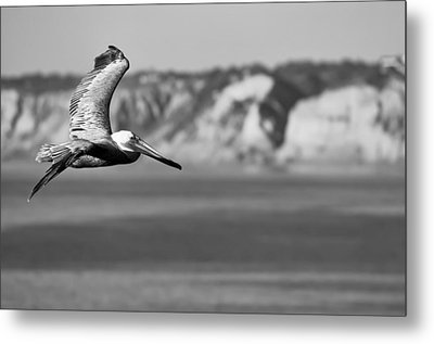 Pelican In Black And White Metal Print by Sebastian Musial