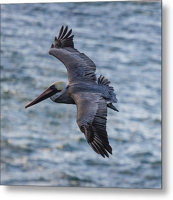 Metal Print featuring the photograph Pelican In Flight by Sonny Marcyan