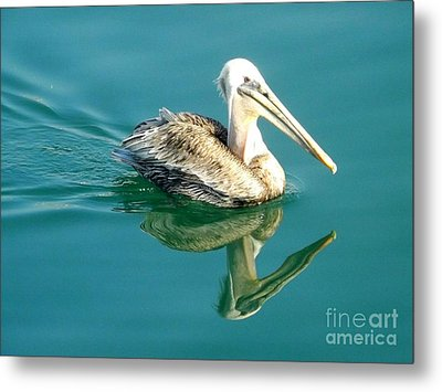 Metal Print featuring the photograph Pelican In San Francisco Bay by Clare Bevan