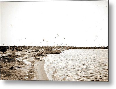 Pelican Island, Indian River, Jackson, William Henry Metal Print by Litz Collection