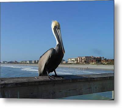 Metal Print featuring the photograph Pelican  by Kay Gilley