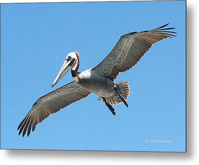 Metal Print featuring the photograph Pelican Landing On  Pier by Tom Janca