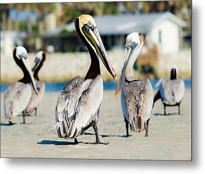 Pelican Looking At You Metal Print