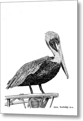 Pelican Of Monterey Metal Print by Jack Pumphrey