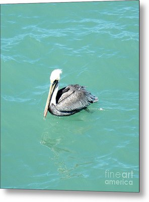 Metal Print featuring the photograph Pelican by Oksana Semenchenko