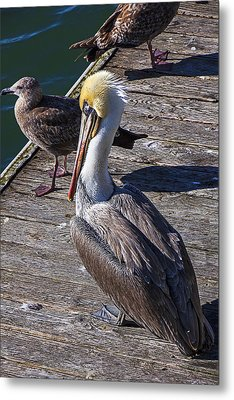 Pelican On Dock Metal Print