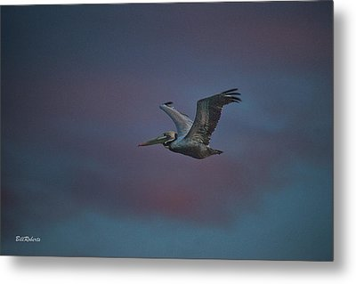 Pelican On The Wing Metal Print by Bill Roberts