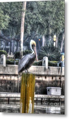 Pelican On Water Post Metal Print by Dan Friend
