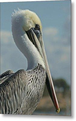Pelican Profile 3 Metal Print by Ernie Echols