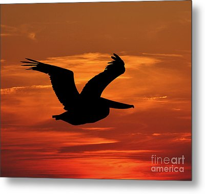 Pelican Profile Metal Print by Al Powell Photography USA