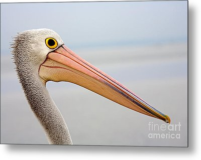 Pelican Profile Metal Print by Mike  Dawson