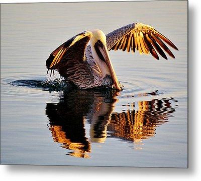 Pelican Reflection Metal Print by Paulette Thomas