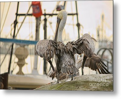 Pelican Strut Metal Print by Donna Greene