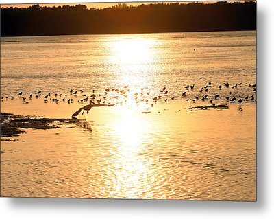 Pelican Sunset Metal Print by Mark Russell