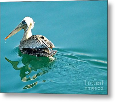 Metal Print featuring the photograph Pelican Swimming by Clare Bevan