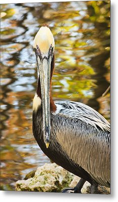Metal Print featuring the photograph Pelican by Tammy Schneider